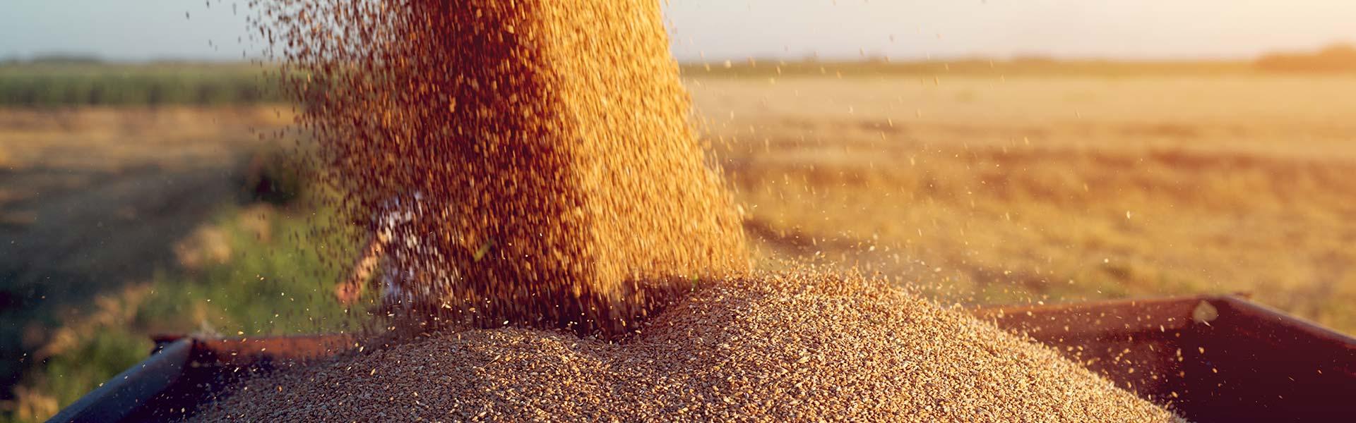 Урахування специфіки сільського господарства України